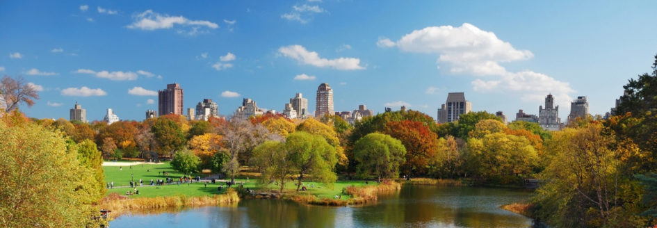 view of new york city from central park